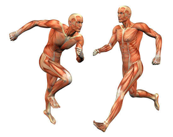 Five ways to boost tendon strength and health.